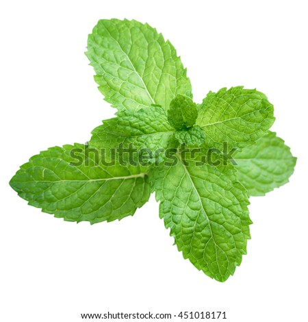 Fresh raw mint leaves isolated. Mint leaves on white background. Green mint leaves. Mint leaves from Thailand.  #451018171
