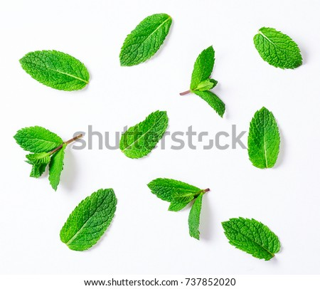 Fresh raw mint leaves isolated on white background #737852020