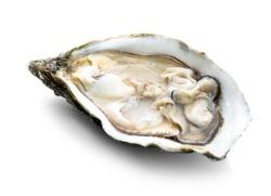 Fresh raw oyster on white background
