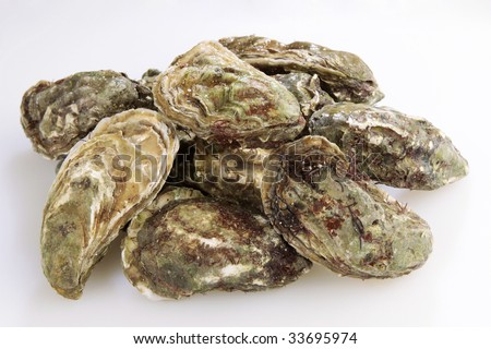 Fresh raw oysters - photo#24