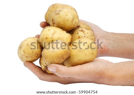 Fresh raw potato in hands of the farmer. Isolated on white, with clipping patch.