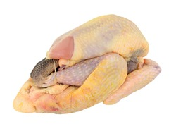 Fresh raw prepared whole Guinea fowl isolated on a white background