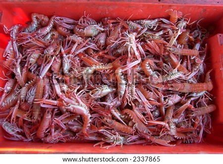 Fresh Raw Seafood Langoustines / Dublin Bay prawns / Norway Lobster / Scampis in a red box