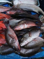 Fresh raw snappers in wet stall of traditional market with another red snapper beside