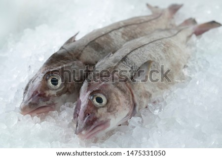 Fresh raw whole haddock fish on ice in the shop ストックフォト ©