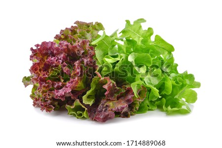 Fresh red and green lettuce isolated on white background. Сток-фото ©