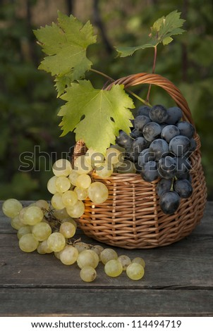 fresh red and white grape at basket outdoor