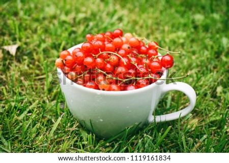 Fresh red currant in a white cup