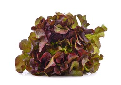 Fresh red lettuce isolated on white background.