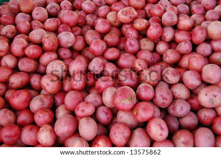 fresh red potatoes - stock photo