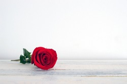 Fresh red rose flower on the white wooden shelf. White background.