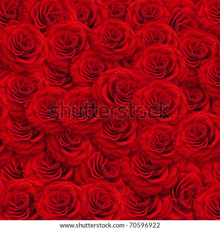 Fresh Roses With Water Fresh Red Roses Backgroud With