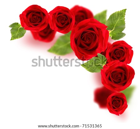 Fresh red roses border isolated on white background