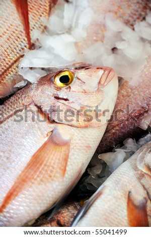 Fresh Red Snapper, market of Madeira, Portugal