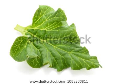 Fresh Rhubarb leaf (Rheum rhabarbarum) isolated on white