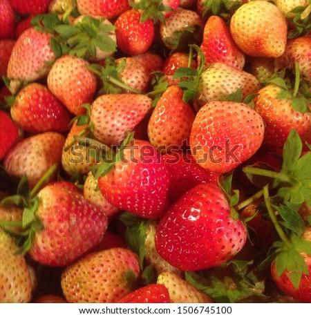 fresh ripe and not ripe strawberry