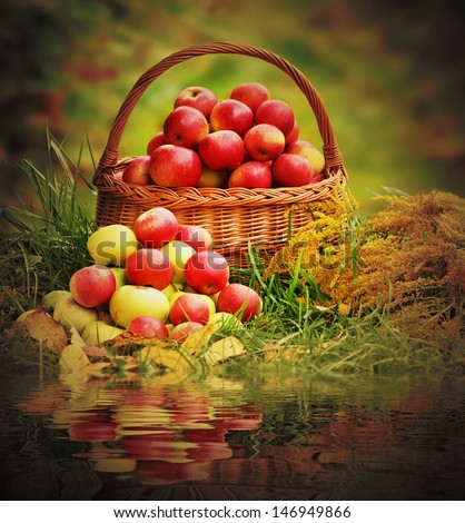 Fresh ripe apples in the basket. Retro style picture on theme autumn at the rural garden.
