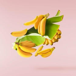 Fresh ripe baby bananas with leaves falling in the air isolated on pink background. Food levitation concept. High resolution image