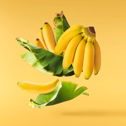Fresh ripe baby bananas with leaves falling in the air isolated on yellow background. Food levitation concept. High resolution image