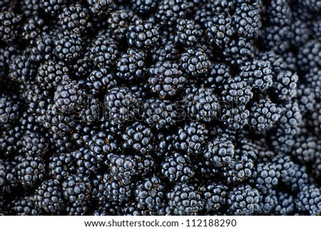 Fresh Ripe Blackberries