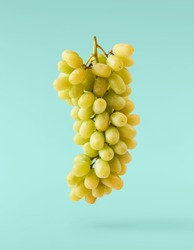 Fresh ripe grape falling in the air isolated on turquoise background