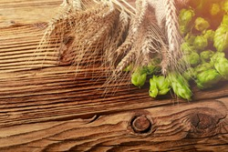Fresh ripe hops with wheat as a ingredients for cooking beer on wooden table . Copy space for text.