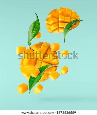 Fresh ripe mango with leaves falling in the air isolated on turquoise background. Food levitation concept. High resolution image