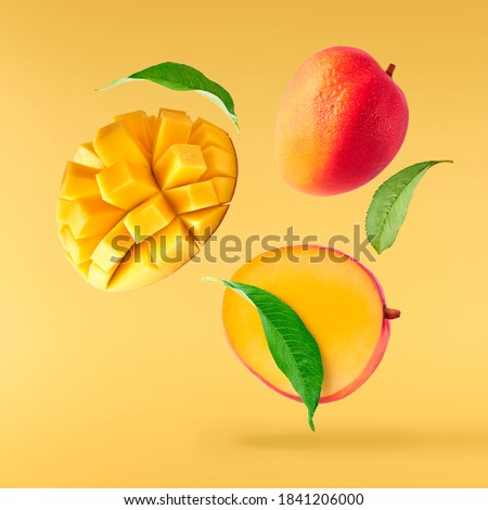 Fresh ripe mango with leaves falling in the air isolated on yellow background. Food levitation concept. High resolution image