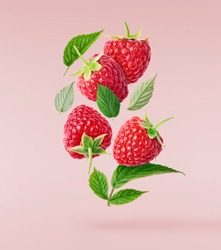 Fresh ripe raspberries, green leaves and flowers flying in the air isolated on pink background. Concept of food levitation, high resolution image