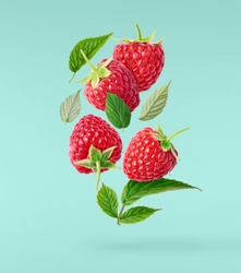 Fresh ripe raspberries, green leaves and flowers flying in the air isolated on turquoise background. Concept of food levitation, high resolution image