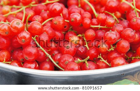 Fresh ripe red currant