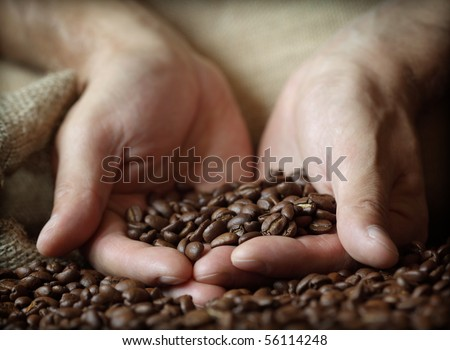 Fresh roasted coffee beans pouring out of cupped hands into a burlap sack