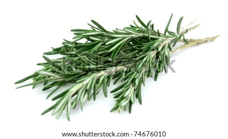 Fresh rosemary bunch on a white background - stock photo