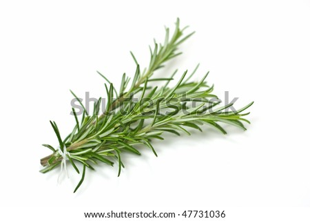 Fresh rosemary bunch with selective focus isolated on white background in horizontal format