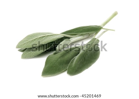 Fresh sage leaves isolated on white background. Close up