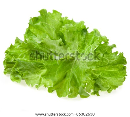 Fresh salad lettuce close up , top view, isolated on white