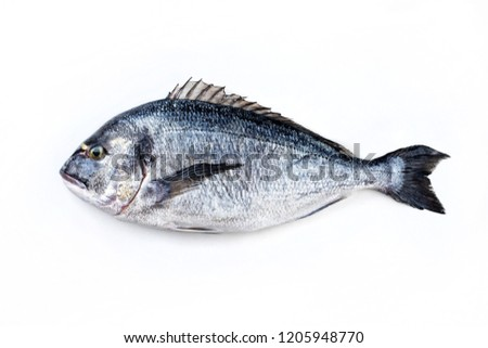 Fresh saltwater gilthead seabream as top view on white background with copy space – isolated