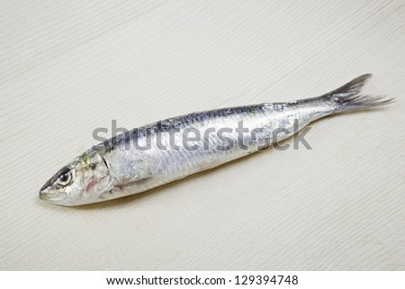 Fresh sardines, detail of raw, healthy food rich in protein, healthy food