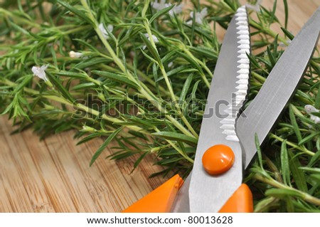 Fresh savory and gardening scissors