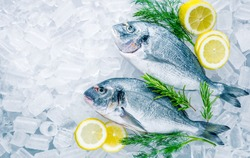 Fresh sea Bream on ice background