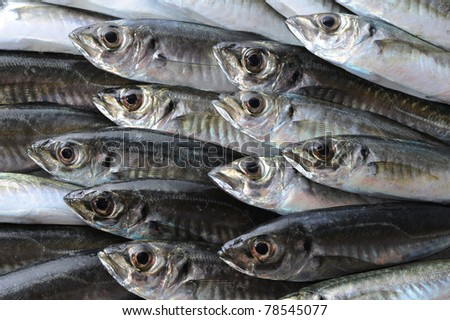 Fresh sea fish horse mackerel background