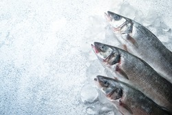 Fresh sea fish. Sea bass with ice on a light background. Top view free copy space.