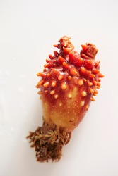 Fresh sea squirt on white background