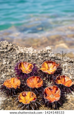 Fresh sea urchins with orange eggs ready to eat on the rocks with sea on background Stockfoto ©