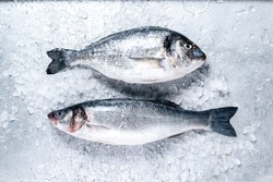 Fresh Seabass and Seabream with ice on metal background