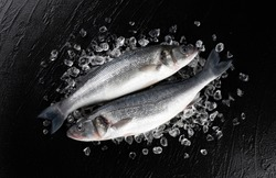 Fresh seabass fish on ice on black stone background, top view with copy space