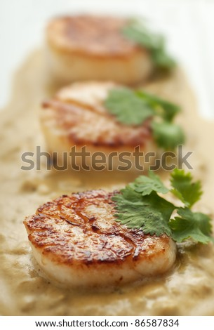 Fresh seared scallops with cream sauce and cilantro/Scallop Appetizer