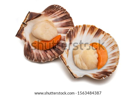fresh shell scallop isolated on white background Stock foto ©