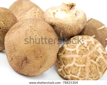 Fresh shiitake mushrooms isolated on white background