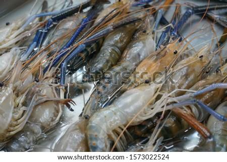 Fresh shrimp at the fresh market, Fresh shrimp in the stainless steel tray